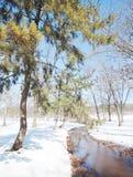 Vinter i floden Royaltyfri Foto
