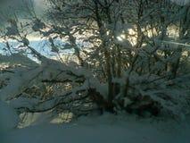 Vinter i Georgia berg Träd i sunlights arkivfoton