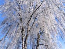 Vinter i Herningen, Danmark Royaltyfria Bilder