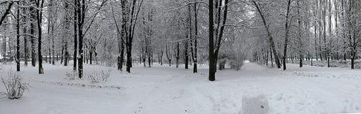 Vinter i Kieven Arkivbild