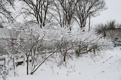 Vinter i landet Royaltyfria Bilder