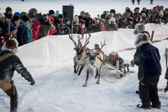 Vinter i Lapland, Sverige, Norrbotten royaltyfri bild