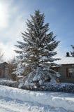 Vinter i Lettland Royaltyfri Foto