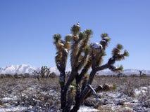 Vinter i Mojaveöknen Nevada Arkivbild