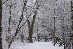 Vinter i naturslingan Arkivfoto