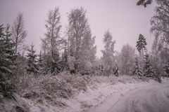 Vinter i norska skogar Royaltyfri Foto