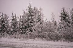 Vinter i norska skogar Arkivbild