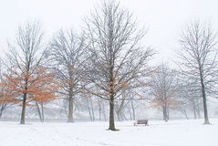 Vinter i parkera Royaltyfri Fotografi