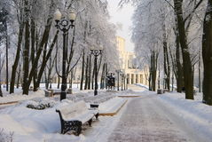 Vinter i parkera Arkivbilder