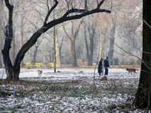 Vinter i parkera Arkivbild