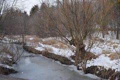 Vinter i parkera Arkivfoton