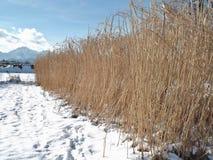 Vinter i Salzburg, Österrike, Europa Arkivfoton