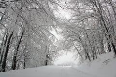 Vinter i Serbien Arkivbild