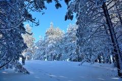 Vinter i Serbien Zlatibor 2017 Arkivfoto