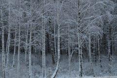 Vinter i skog royaltyfri bild