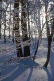 Vinter i skog Royaltyfria Bilder