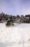 Vinter i skog Royaltyfri Foto