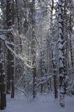 Vinter i skog Royaltyfria Foton
