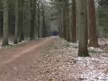 Vinter i skogen royaltyfri fotografi