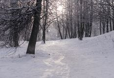 Vinter i skogen arkivbilder
