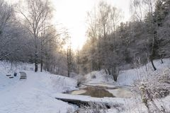 Vinter i skogen arkivfoton