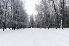Vinter i skogen royaltyfri bild