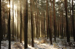 Vinter i skogen. Arkivbilder