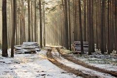 Vinter i skogen Arkivbild