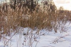 Vinter i skogen Royaltyfri Foto