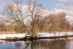 Vinter i skogen Fotografering för Bildbyråer