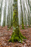 Vinter i skogen Tuscan Royaltyfri Fotografi