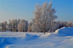 Vinter i stäppen Arkivbild