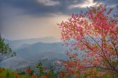Vinter i Thailand Arkivfoton