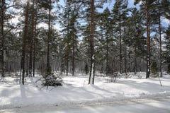 Vinter i träna med med snö royaltyfri bild