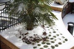 Vinter i tropikerna Royaltyfria Foton