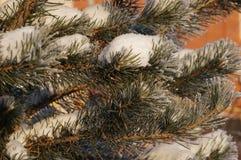 Vinter i Vologda Arkivbilder