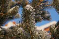 Vinter i Vologda arkivbild