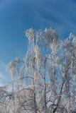 Vinter-intrycket Arkivbilder