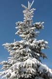 Vinter-intrycket Arkivbild