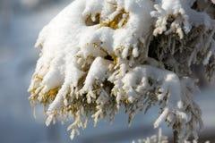 Vinter-intrycket Royaltyfri Foto