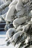 Vinter-intrycket Arkivfoton