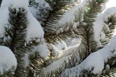 Vinter-intrycket Royaltyfria Bilder