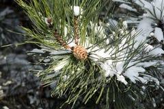 Vinter-intrycket Royaltyfri Fotografi