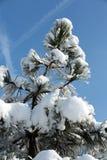 Vinter-intrycket Arkivfoto