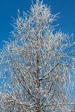 Vinter-intrycket Royaltyfri Bild