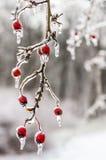 Vinter. Isläggning. Royaltyfria Foton