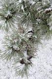 Vinter. Isläggning. Royaltyfri Bild