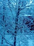 Vinter kallt snow Träd Arkivbilder