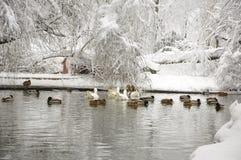Vinter lake Royaltyfri Fotografi