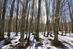 Vinter Landascape Royaltyfria Foton